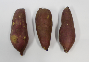 石焼き芋の画像 p1_2